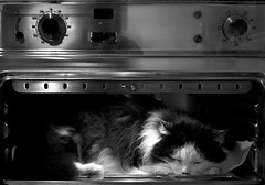 P4135907 (Topyti) Tags: cats white black animal cat sleep olympus minet gatto gatti forno cc100