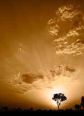 Divine Light (bnilesh) Tags: indore silhouettesunlightdivinepurelightentreeskycloudssepiaverticallandscapesunsetmagicallightingsunbeamspiritualwallpaperbrowndarknatureglowingblacksunbacklightalmightygodblessings