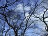 日本京都行屋與樹之美DSCN5591
