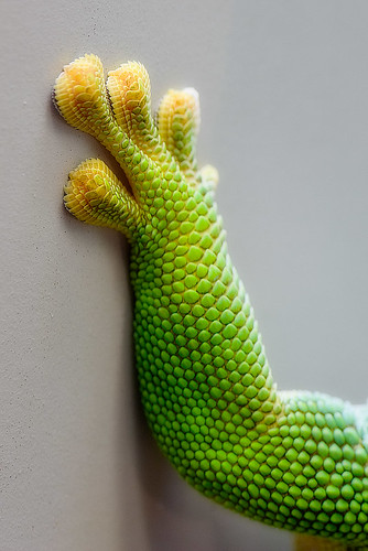 geckos toes by iPhotograph