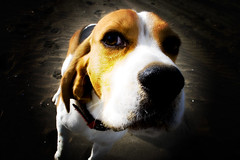 cano_18mm (willysaw) Tags: portrait dog cane photoshop canon vintage toy eos holga lomo lomography shot fake simulation dolce processing faux vignetting effect grandangolo ritratto spiaggia saverio 18mm simulated vignetta holgagraphy lomolike nasone 400d willysaw villirillo