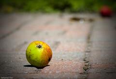 Apple on the pavement (Sebastian Olar) Tags: color macro apple nature d50 nikon dof bokeh pavement urbannature saturation tamron 90mm