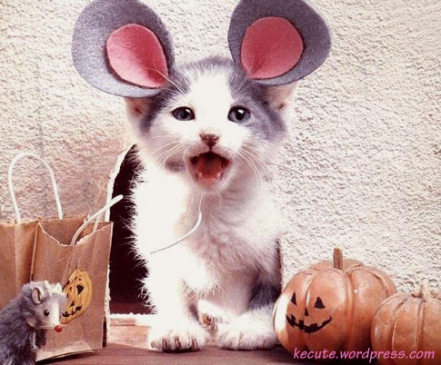 Costume Cats Ears