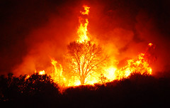 tree on fire Irvine (ejkim06) Tags: california tree nature fire wind firefighter irvine watcher inlandempire blueribbonwinner supershot anawesomeshot superbmasterpiece goldenphotographer amazingamateur excapture