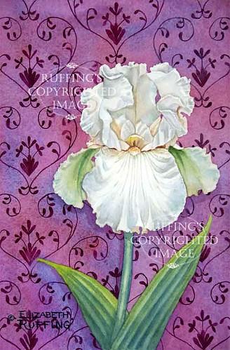 """""""Valentine"""" ER30 by Elizabeth Ruffing Pale Pink Iris Floral"""