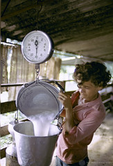 Pouring and weighing fresh milk. Colombia. Photo: © Edwin Huffman / World Bank
