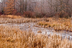 Great Swamp Winter