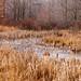 Great Swamp Winter