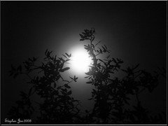 """Jan a Full Moon"" (stephgum32807) Tags: bw naturaleza moon nature orlando florida january specialeffects blueribbonwinner golddragon anawesomeshot dragongoldaward"