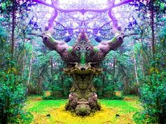 The almighty (Andreas.P.Martin) Tags: art artwork spiegel kunst natur paranormal bume baum wunderbar baumgeist psychedelisch artphotography wchter fotokunst baumgeister besonders phnomene spiegeltechnik