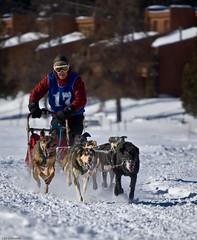 #17 (Luc Deveault) Tags: dog chien canada animal race quebec hiver competition course qubec luc sled steagathe laurentides winther stagathedesmonts stagathe photosafarimtl psmarouge photoquebec deveault classiqueronadagenais psm160208 lucdeveault