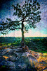 The One Tree (iceman9294) Tags: gardenofthegods chriscoleman abigfave iceman9294