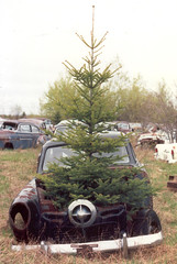 A Studebaker under a Christmas tree? (JarvisEye) Tags: auto abandoned car junk automobile antique maine voiture limestone fir studebaker scrap salvage sapin ancienne unused antiqueauto voitureancienne