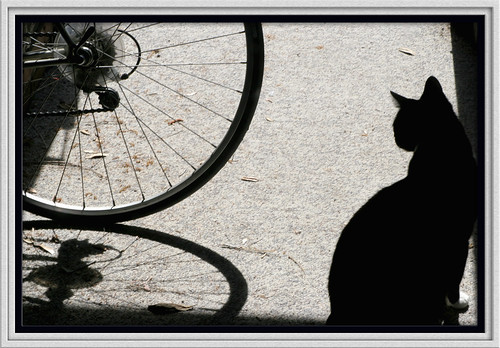 Framed - bike cat