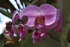 Orchids (Flafotog) Tags: flowers plants macro canon5d horticulture 100mm28macro