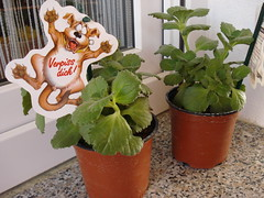 Verpiss dich pflanze