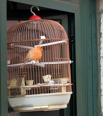 destino (Américo Meira) Tags: portugal lisboa ajuda gaiola pássaro ave
