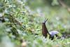 Slug (alekampo) Tags: thepinnaclehof tphofweek97
