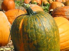 pumpkin colours