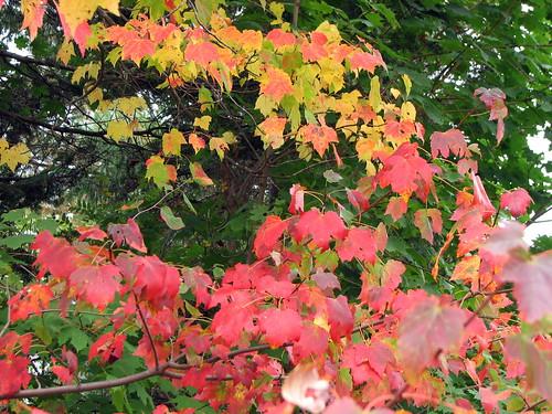 ahhh, fall