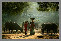 Morning Raga (Paren) Tags: morning light people by rural italian national geographic gujarat ngi ruralindia villagesofindia alampura