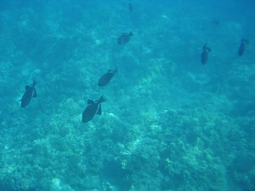 Maui 51