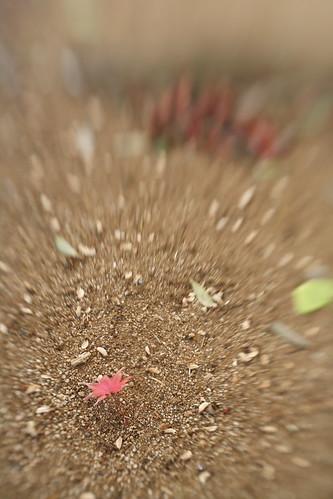 宮代の秋 -3- Lensbaby