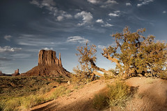 desert (mike.irwin) Tags: park sunset arizona sky tree monument clouds landscape sand nikon desert tribal valley navajo mittens buttes wwwmikeirwinartcom