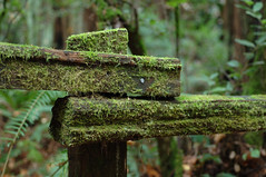 Moss on Fence (Soller Photo) Tags: california wood green nature forest fence moss muirwoods naturesfinest blueribbonwinner abigfave sollerphoto