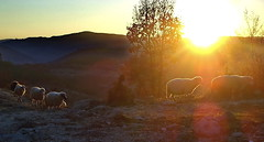 Magic sheep (Emilofero) Tags: sunset sky sun mountain soleil europe ciel bulgaria cielo balkans sole balkan bulgarie balcans rodopi bulgarien balcan anawesomeshot impressedbeauty