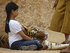 Girl with a tiger on her lap