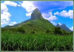 Le Morne mount (Nespyxel) Tags: verde green top mount mauritius montagna lemorne cima mailciler mauritiusisles nespyxel rempartmountain stefanoscarselli pleasedontusethisimageonwebsites blogsorothermediawithoutmyexplicitpermissionallrightsreserved