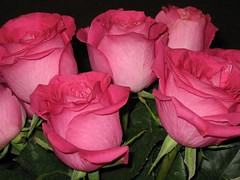 roses (Leya :P) Tags: pink flowers roses firsttheearth flowersarefablulous