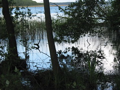Mritzsee, Mritz lake (lionardo) Tags: mritz mritzseemritzmecklenburg