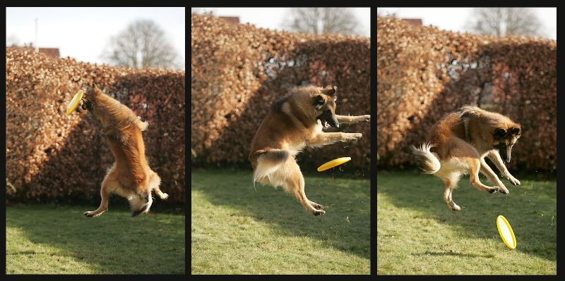 Hurra Frisbee