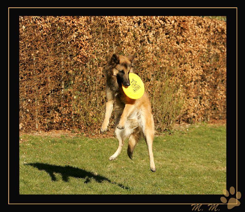 Frisbee-Wayne