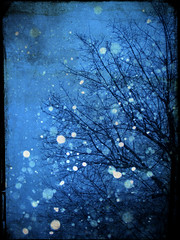 the only other sound (roujo) Tags: blue winter snow cold tree texture squall photoshop frost overlay blow photomanip