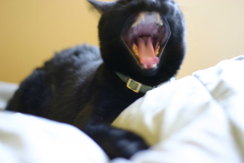 Mole yawning