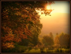 Herbst in Oberberg - autumn near cologne (NPP-publik_oberberg) Tags: autumn fall herbst nature germany sun sundown landscape art creative oberberg cologne tree leaf yellow red spiderweb abigfave diamondclassphotographer firstquality platinumphoto infinestyle themoulinrouge megashot impressedbeauty platinumsuperstar theunforgettablepictures vosplusbellesphotos bestcapturesaoi artistoftheyearlevel4 artistoftheyearlevel3