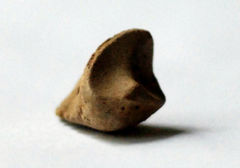 v Fossil 006