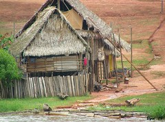 Village huts (Byrd on a Wire) Tags: peru amazon village huts amazonvillage