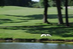 DSC_0869 (rich.reierson@verizon.net) Tags: golf papyrus 2008 isis
