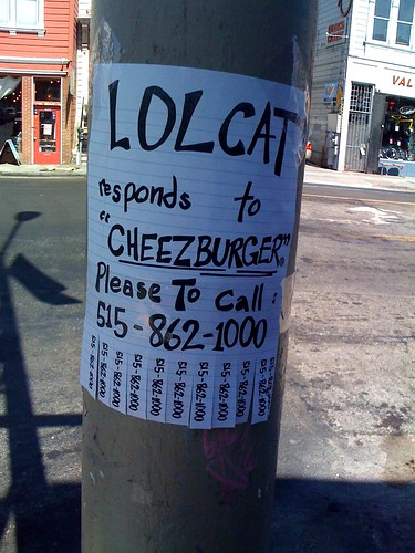 Anyone looking for a lolcat?