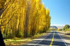The infamous alamo trees (Jessie Reeder) Tags: travel southamerica international sudamrica