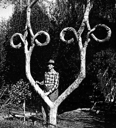 tree-manipulation