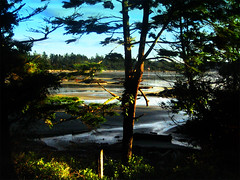 Beach Tree (micmikemic1) Tags: ocean trees sunset sun canada tree beach water forest sunrise sand branch bc britishcolumbia branches sunny vancouverisland longbeach tofino