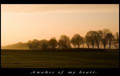 Be My Sunshine (Sakuto) Tags: sun color tree sunshine sunrise view planscape