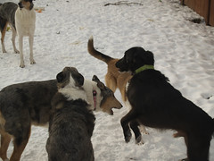 The Pack Playing