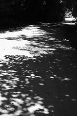 gracias árbol, una vez más por tus sombras (Analía Acerbo Arte) Tags: blancoynegro arbol camino sombra sur