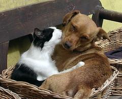 Friendship? Love? (stiglice - Judit) Tags: dog cat friendship
